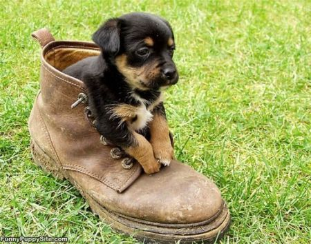 Boot_Puppy